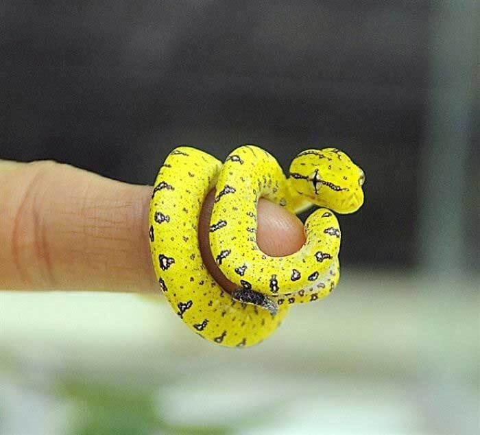 Yılan Fotoğrafı