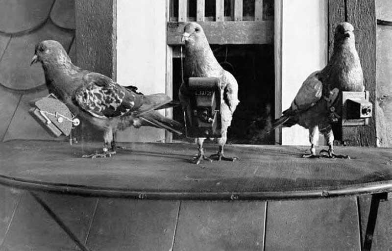 Julius Neubronner: Fotoğrafçı Güvercinlerin Hikayesi